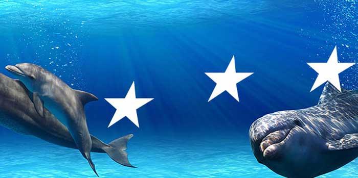 delphin Stellenvermittlung kooperiert mit delphin-Gewinnern